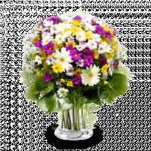 Joyeuses Marguerites : Marguerites Variées