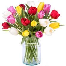 Délice Printanier : 20 Tulipes Colorées