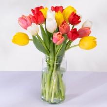 Iris: 20 Colourful Tulips