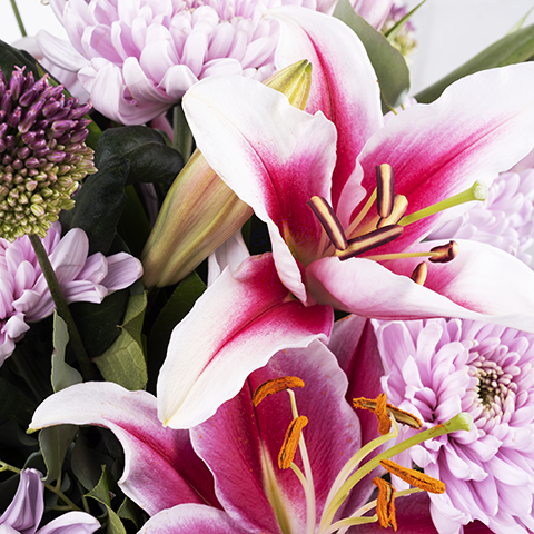 Imbir: lilie ichryzantemy Anastasia Pink