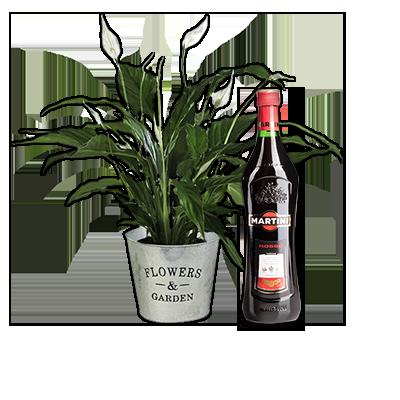 Spathiphyllum con Martini rosso