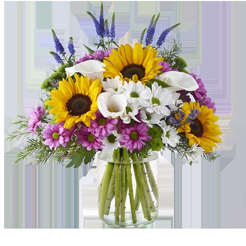 Balance: Chrysanthemen und Sonnenblumen