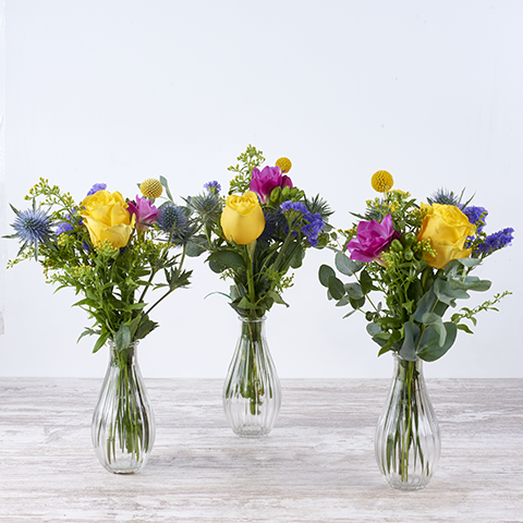 3 Mini Veranos: Rosa Amarilla y Freesia