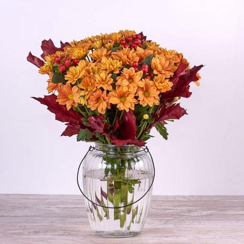 El Roble: crisantemos de otoño