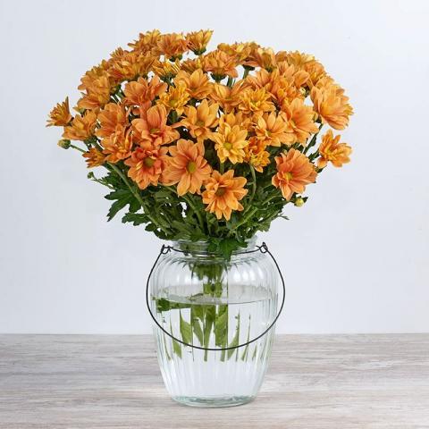 Mariposa: crisantemos naranjas