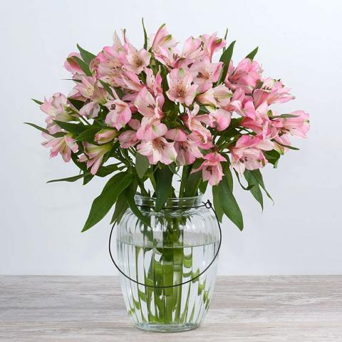 Esperanza: alstroemerias rosa