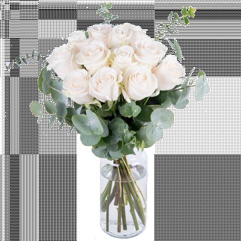Algodón: 12 rosas blancas