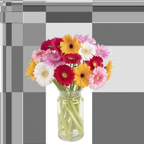 Happy Together: gerberas multicolor