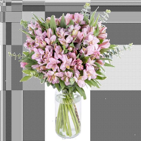 Esperanza: alstroemerias rosas