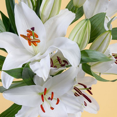White Gold: lilies