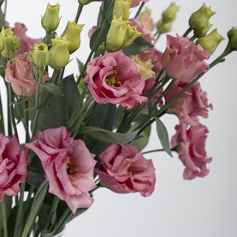 All and Nothing: lisianthus