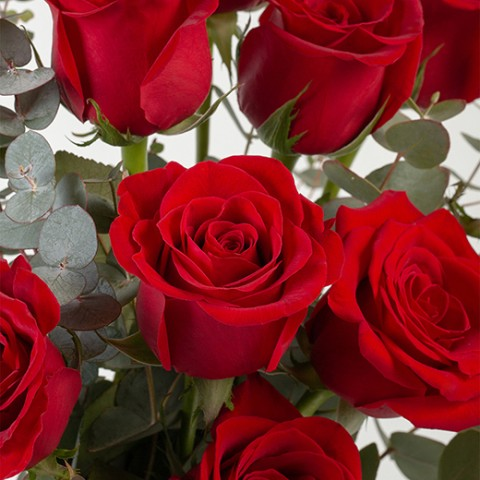Instant Classic: 12 red roses