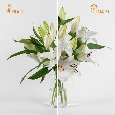 Oro Blanco: liliums